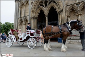 Ely Cathedral Wedding Photography Arrival Horse and Cart